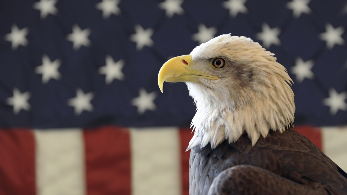 An eagle in front of a flag